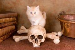 Sería algo un gato negro Imagen de archivo libre de regalías