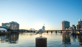 Süßer Hafen in Sydney Stockfotos