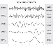 Ser humano Brain Waves Diagram/carta/ilustração Imagens de Stock Royalty Free