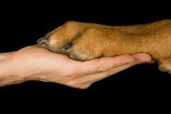 Ser humano da amizade contra o cão