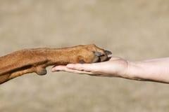 Ser humano de la amistad contra perro Foto de archivo libre de regalías