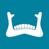 Ser humano de la mandíbula Una quijada más inferior Anatomía del hueso Parte de sku stock de ilustración