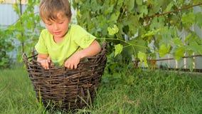 Ser humano e natureza Menino na cesta Conceito feliz da infância filme