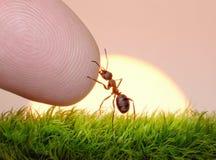 Ser humano, naturaleza y hormiga - dedo de la amistad Imagenes de archivo