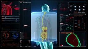 Ser humano zumbindo os órgãos internos, sistema da digestão Luz azul do raio X no painel da interface de utilizador da indicação