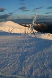 Sera in anticipo sulla neve Immagine Stock Libera da Diritti