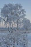 Sera del gelo degli alberi della neve di inverno Fotografie Stock