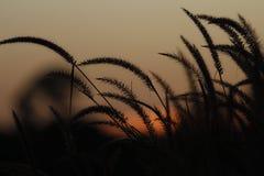 Sera dell'erba Fotografia Stock Libera da Diritti
