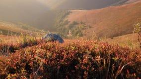 Sera di autunno in montagne carpatiche Immagine Stock