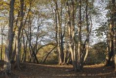 sera di autunno nelle montagne di Lago-Naki fotografia stock