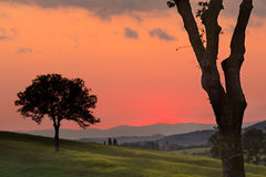 Sera dorata in Toscana Fotografia Stock Libera da Diritti