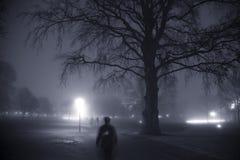 Sera nebbiosa nella sosta Fotografia Stock