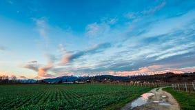 Sera nei campi di Friuli Fotografia Stock