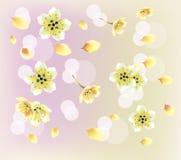 Sera nella ciliegia di fioritura del giardino Fotografia Stock Libera da Diritti
