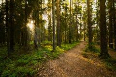 Sera nella foresta Fotografia Stock