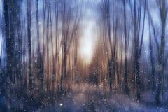 Sera vaga nel parco nebbioso Fotografie Stock
