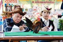 Serama比赛在泰国。 免版税库存图片