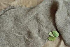 Serapilheira e folhas Fotografia de Stock