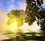 Serbal-árbol Foto de archivo libre de regalías