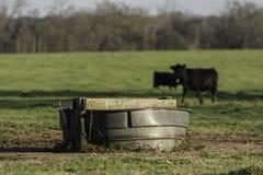 Serbatoio di acqua con il bestiame nel fondo immagini stock