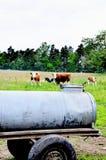 Serbatoio di acqua e mucche mobili tradizionali fotografia stock libera da diritti