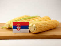 Serbian flag on a wooden panel with corn isolated on a white bac. Kground stock photography