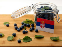 Serbian flag on a wooden plank with blueberries on whit. E royalty free stock images