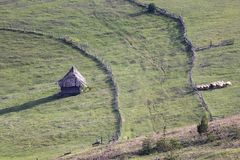 Serbian traditional wood house and flock of sheep. In Zlatibor royalty free stock photo