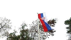 Serbische Flagge stock video footage