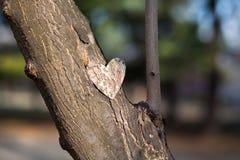 Serca i walentynka dnia dekoracja w parku. Plenerowi składy. Obrazy Royalty Free