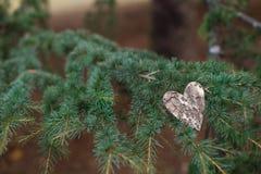 Serca i walentynka dnia dekoracja w parku. Plenerowi składy. Zdjęcia Royalty Free