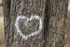 Serca na drzewie Fotografia Royalty Free