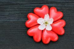 Serca z czereśniowym okwitnięciem na drewnie Obrazy Royalty Free
