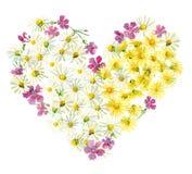 Serce żółci i biali kwiaty ilustracja wektor