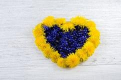 serce ' Błękit i kolor żółty kwitniemy na stole w shap Zdjęcie Royalty Free