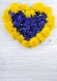 serce ' Błękit i kolor żółty kwitniemy na stole w shap Fotografia Royalty Free