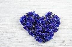 serce ' Błękit kwitnie na stole w formie słuchającego Obraz Royalty Free
