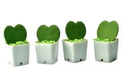 Serce Kształtować rośliny Obraz Royalty Free