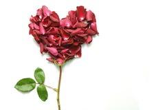serce kształtującego kwiaty Zdjęcia Royalty Free