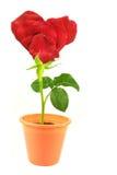 serce kształtującego kwiaty Zdjęcie Royalty Free