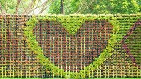 Serce kształtujący kwiaty Fotografia Stock