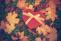 Serce kształtujący liście na ziemi i pudełko Obraz Stock