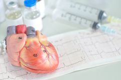 Serce ludzki model Fotografia Stock