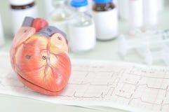 Serce ludzki model Zdjęcia Stock