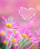 Serce motyle na różowym tle z chryzantemami Obraz Royalty Free