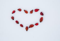 Serce na śniegu różani biodra Obraz Stock