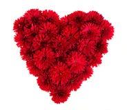 Serce od czerwieni kwitnie odgórnego widok Fotografia Royalty Free