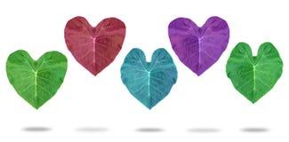 Serce opuszcza kolory Na białym tle Zdjęcia Stock