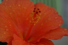 Serce pomarańczowy kwiat fotografia stock