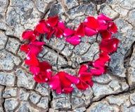 Serce różani płatki na suchej ziemi Zdjęcia Stock